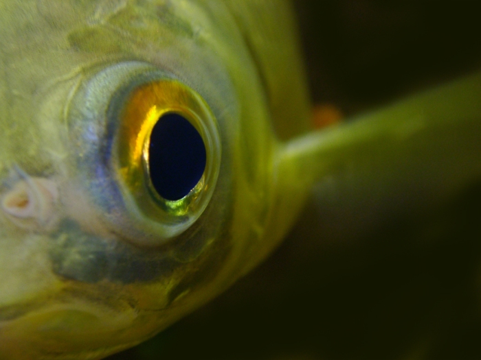 fish-1465433