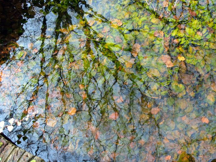reflections-1555279