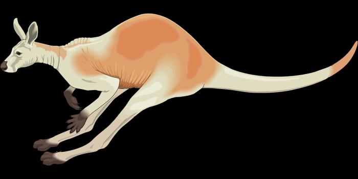 kangaroo-48375_1280 (1)