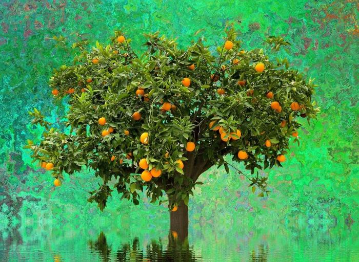 tree-2478687_1920