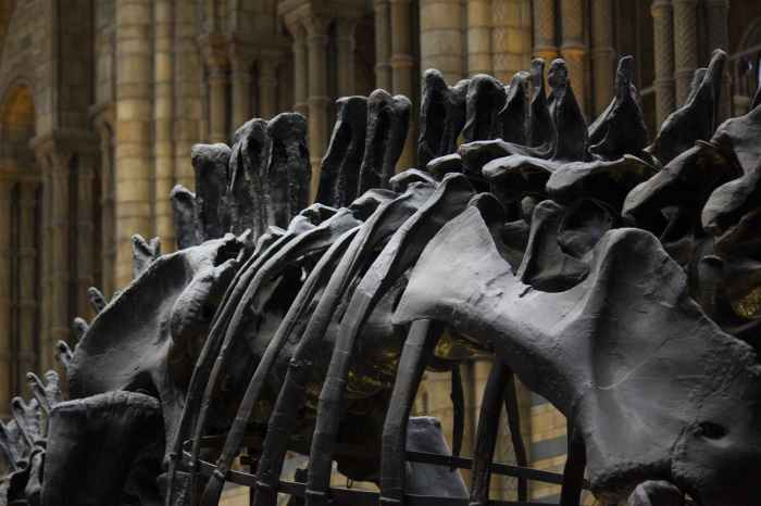 Image Description: A close-up of the spine of a dinosaur fossil.