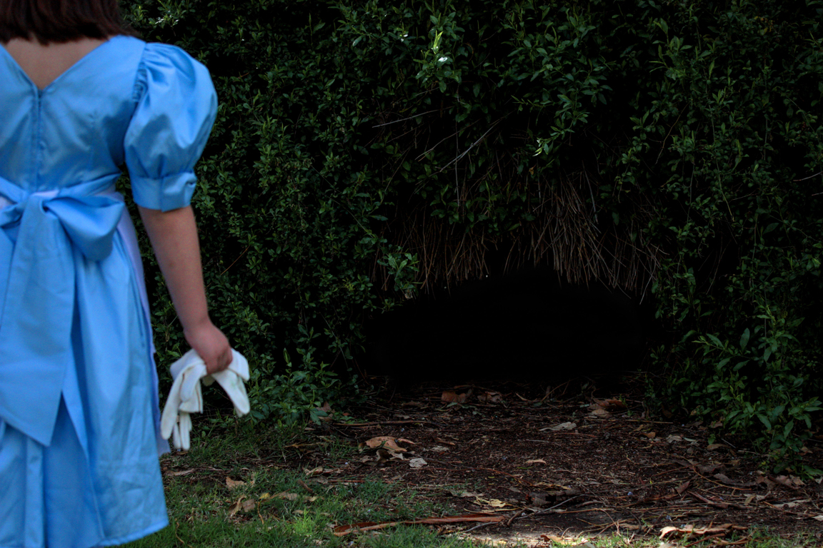 Alice survey the dark woods in her blue dress.
