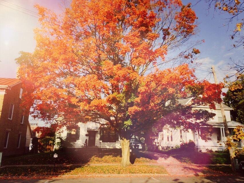 Orange fall tree, so bright it glows.